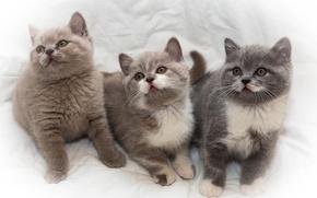 Картинка котята, малыши, трио, троица