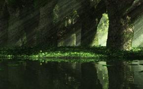 Картинка трава, лучи, свет, деревья, природа, narcissus mirror