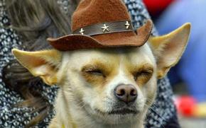 Картинка морда, собака, шляпа