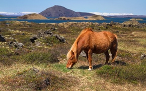 Картинка горы, Исландия, холмы, пастбище, залив, лошадь