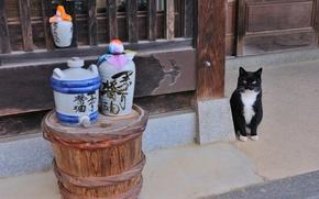 Картинка Кошка, Япония, саке