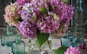 Картинка стиль, букет, цветки, гортензия, бутылочки