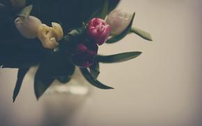 Картинка листья, цветы, тюльпаны