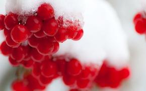 Картинка зима, снег, ягоды, калина