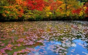 Картинка осень, деревья, пруд, парк, тропинка
