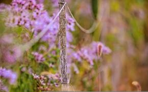 Обои макро, цветы, забор