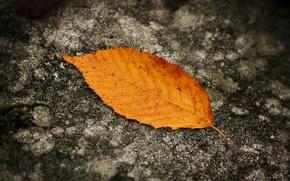 Обои Осень, Лист