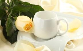 Картинка цветок, цветы, роза, шелк, бутон, чашка, шёлк