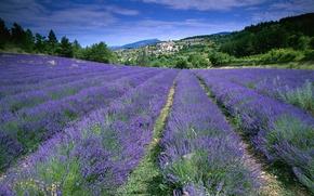 Картинка поле, цветы, Франция, лаванда, Прованс