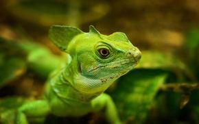 Картинка макро, ящерица, зелёная