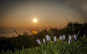 Картинка солнце, макро, цветы, Switzerland