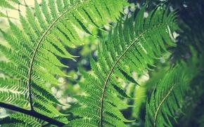 Картинка листья, папоротник, боке
