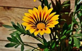 Картинка Боке, Bokeh, Желтый цветок, Yellow flower