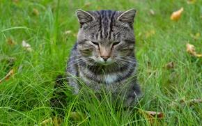 Картинка Кошки, морда, Осень, взгляд, усы