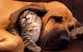 Обои дружба, животные, котенок
