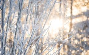 Картинка зима, лес, свет, снег, деревья, ветки, природа, Солнце, красота, Morgendorffer
