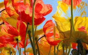Картинка небо, цветы, природа, лепестки, тюльпаны