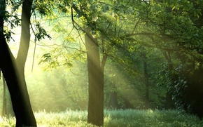Картинка лес, солнце, лучи, деревья, природа, sunshine, forest, Green trees