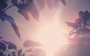 Картинка лето, лучи, закат, природа