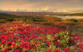 Обои цветы, 152, горы, туман