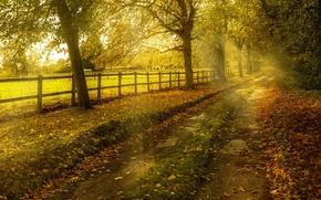 Картинка дорога, осень, природа