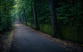 Картинка листья, деревья, природа, фон, дерево, widescreen, обои, дорожка, wallpaper, листочки, тропинка, trees, nature, широкоформатные, background, ...