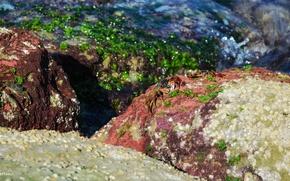 Картинка Landscapes, Sea, Iran, Animal, Qeshm, Crab