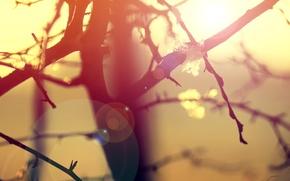 Обои дерево, утро, макро, свет, природа, ветки