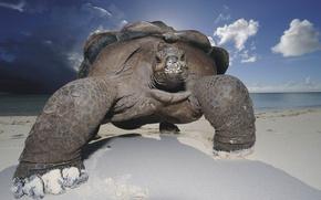 Обои песок, пляж, небо, черепаха, панцирь
