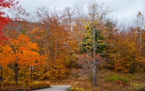 Картинка дорога, лес, colors, Осень, forest, road, autumn, fall
