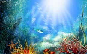 Обои водоросли, Дно, кораллы, рыбки
