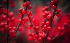 Картинка осень, макро, ягоды, красные