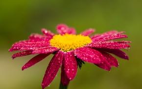 Картинка капли, красный, Цветок, red, flower, боке, bokeh, drops