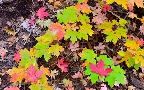 Картинка осень, листья, макро