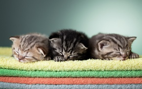 Картинка сон, полотенце, котята, малыши, трио, полотенца, спящие