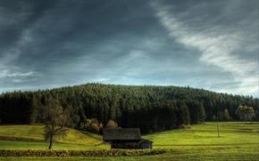 Обои небо, трава, поле, елки