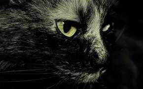 Картинка кошка, глаз, вибрусы
