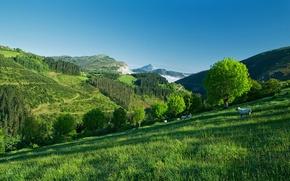 Картинка небо, трава, деревья, горы, овцы, склон