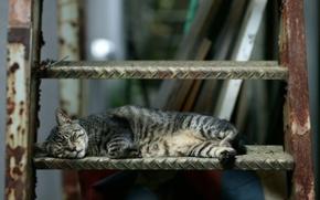 Картинка кошка, спит, лесница