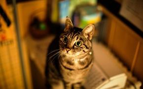 Обои кошка, дом, фон