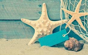 Обои берег, seashells, пляж, beach, песок, море, sand, ракушки, summer, starfish