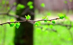 Картинка листья, размытость, Ветка