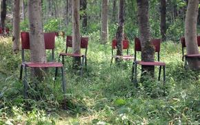 Картинка лес, деревья, стулья