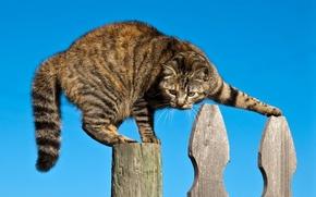 Картинка кот, забор, ситуация