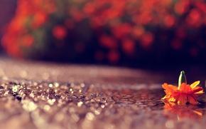 Картинка дорога, цветок, макро, свет, блики, игра, боке