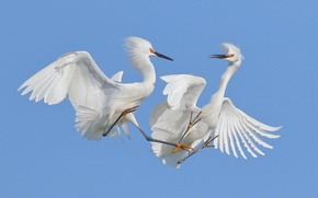 Картинка небо, птицы, танец