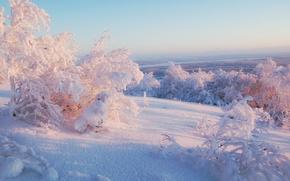 зима, снег, деревья, горизонт, небо, солнечный, свет обои