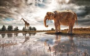 Картинка река, фантазия, слон, арт, жираф