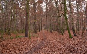 Картинка Осень, Лес, Тропа, Fall, Листва, Autumn, Forest, Листопад, Leaves