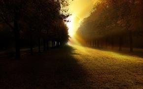 Обои деревья, свет, тень